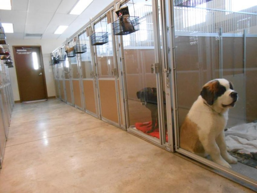 Tips For Choosing a Pet Boarding Facility